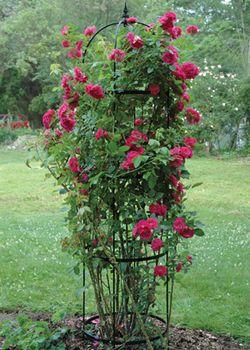 Medium Rose Pillar Obelisk