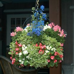 16 Inch Single Tier Imperial Hanging Planter & Liner Set
