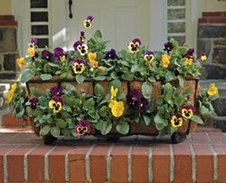 "30"" Window Box Planter & Liner Set"