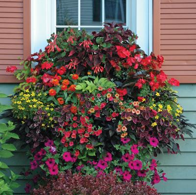 30 Inch Window Box Planter & Liner Set