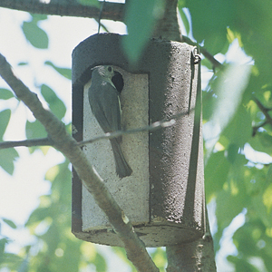 1 1/4 Inch Tree Trunk Birdhouse