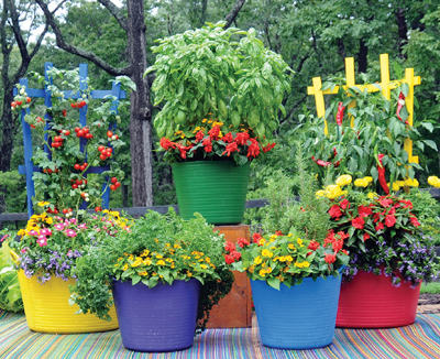 Medium Trug Tubs in Brilliant Colors