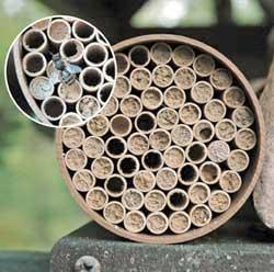Standard Mason Bee Nest Kit  (52 Tubes)
