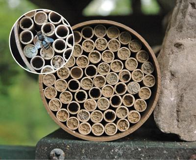 Jumbo Mason Bee Nest Kit 118 Tubes