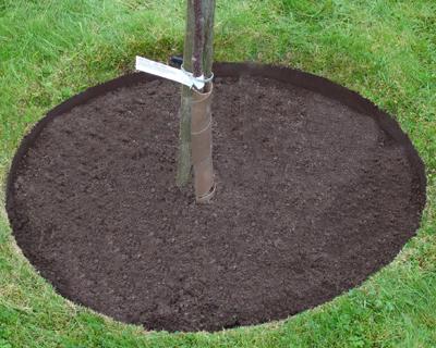 EverEdge Classic Tree Rings
