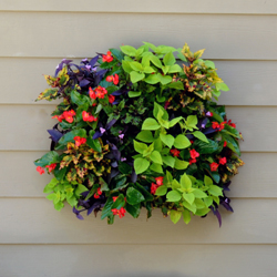 Set of Four Living Wall Planters w/ Liners (Each in Color Gift Box)