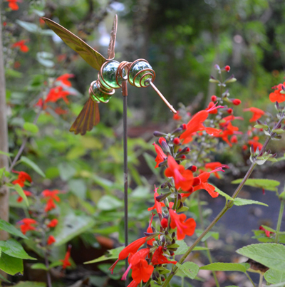 Humphrey the Hovering Hummingbird