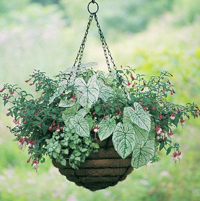 20 Inch Old Fashioned Hanging Basket & Coco Fiber Liner Set