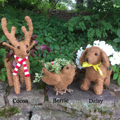 Cocoa the Coco-Fiber Reindeer Topiary Planter