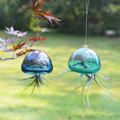 Jelly Fish Air Plant Hangers