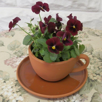 Teacup And Saucer Planter