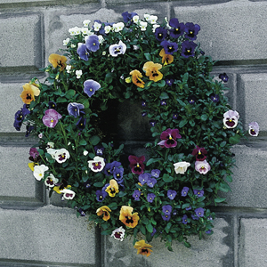Medium 20 Inch Living Wreath Form with Jute Liner