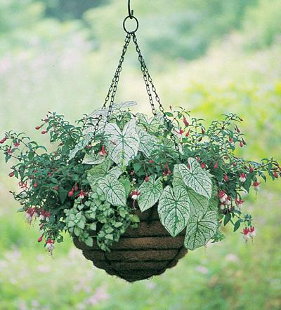 12 Inch Old Fashioned Hanging Basket  & Coco Fiber Liner Set