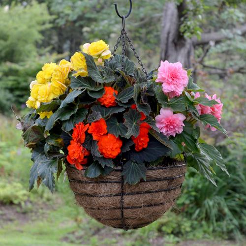 17 Inch Old Fashioned Hanging Basket & Coco Fiber Liner Set