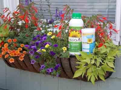Money Saving Planter Kits