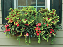 Window-Box-Planter-and-Wall-Planter-Photo-Gallery
