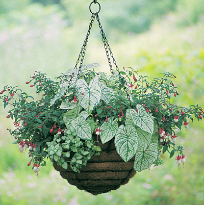 flower vases plastic with Hanging Baskets on Radiator Rails additionally Diy Decoration Ideas From Old Materials furthermore Dipladenia Plant Id 559183 additionally Hanging Baskets additionally Vase Fish Tank.