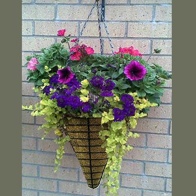 conical hanging basket kinsman garden. Black Bedroom Furniture Sets. Home Design Ideas