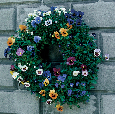Living Wreaths & Floral Globes