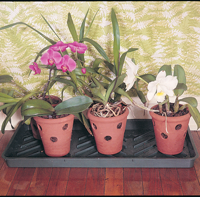 Boot & Plant Trays