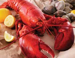 live mail order lobsters
