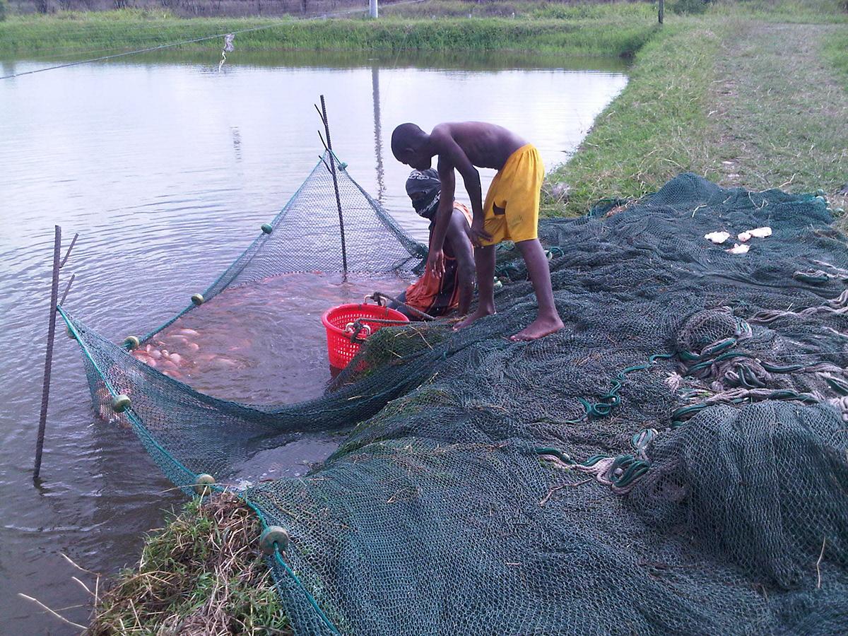 Fishing Contest 2019