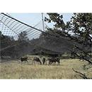 Deer Drop Net