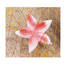 Starfish Decoration, 8 in.