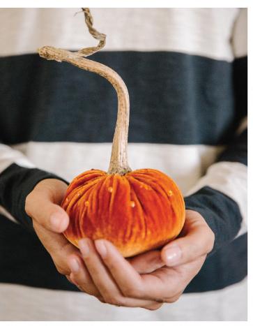 Velvet Pumpkin Trio