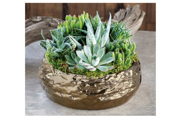 Add a Houseplant to Your Space
