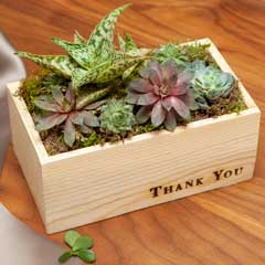 """""""Thank You"""" Succulent"""