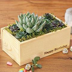 """""""Happy Birthday"""" Succulent"""