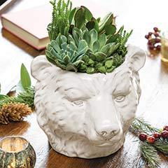 Winter Bear Succulent