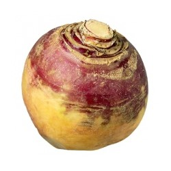 Turnip, also known as neeps