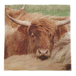 Highland Cow Photo Napkins - pack of 20