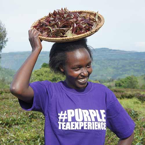 Tea Farmers in Kenya
