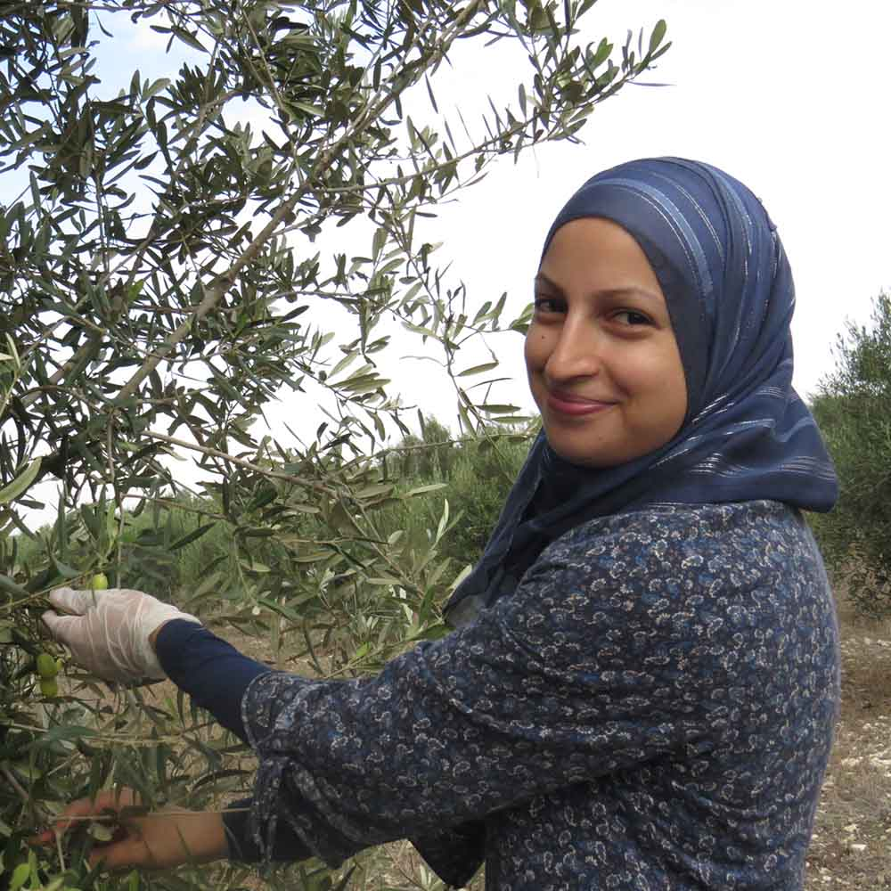 Olive Growers in Israel