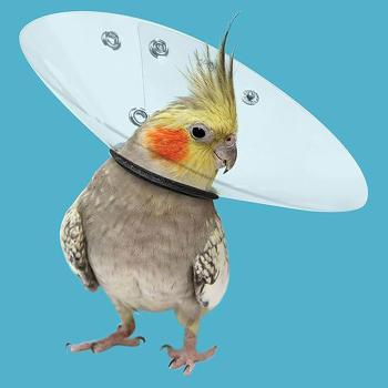 "COLLAR,BIRD,12"".4.7""-5.5""NECK OPENING CIRCUMFERENCE"
