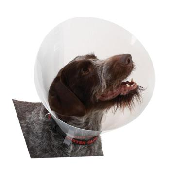 Collar,Buster Dog collar, 10 pack, #7.5