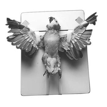 Positioner, avian