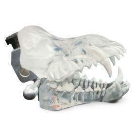 Model, canine clear dental