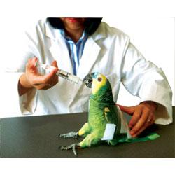 Restrainer, auspex avian, medium