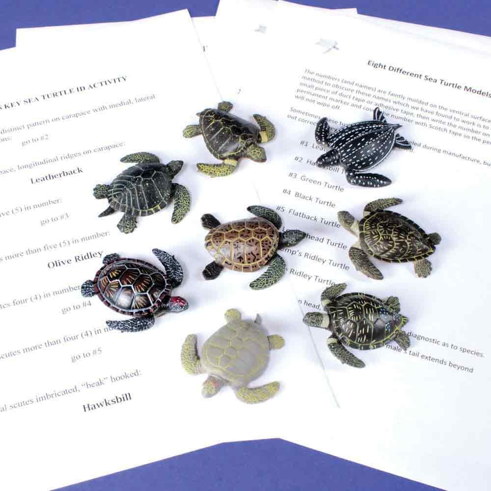 Sea Turtle Dichotomous Key Kit