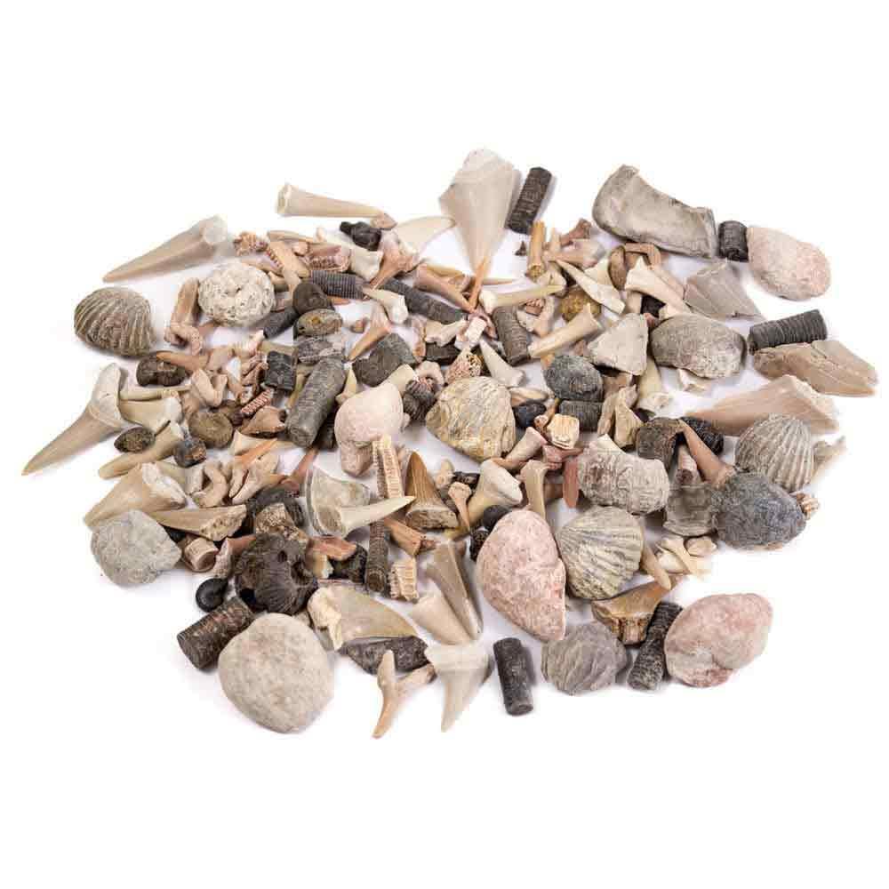 Shark Tooth Stew