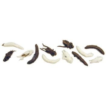 Chocolate Covered Insects - Chocolate Covered Insects (single package of 6)