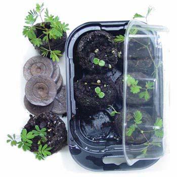 TickleMe Plant Growing Kit