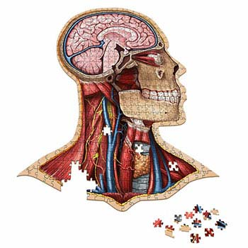Dr. Livingston's Anatomy Jigsaw Puzzles