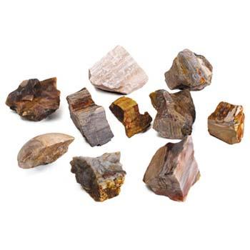 Petrified Wood (10 pieces)