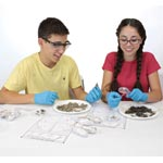 Owl Pellets with Kids