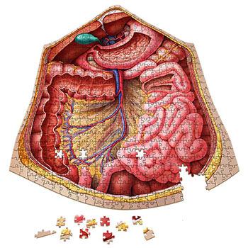 Anatomy Jigsaw Puzzle: Abdomen